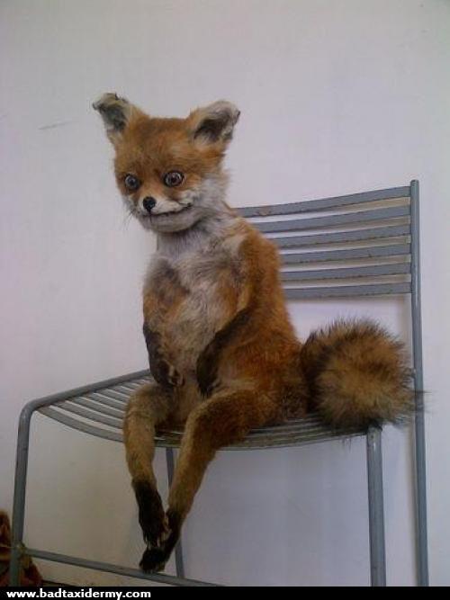 185_fox%20has%20to%20pee[1]